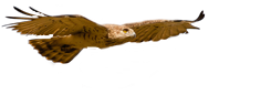 Birding in Portugal Official Website